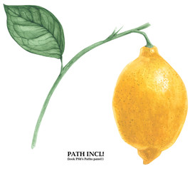 Botanical Watercolor Lemon Branch