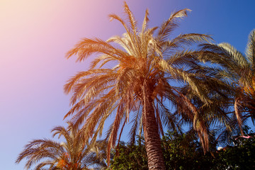 palm tree sun on background of blue sky with sunlight flare