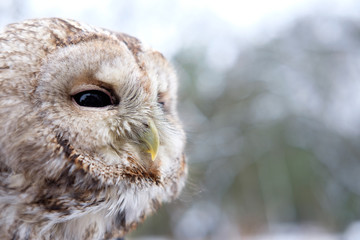 head of owl copy space