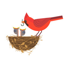 Nothern red cardinal feeding baby birds icon. Cute comic cartoon. Newborn hungry bird sitting in straw nest. Minimalism simplicity wildlife design. Template vector birdwatching, nature care background