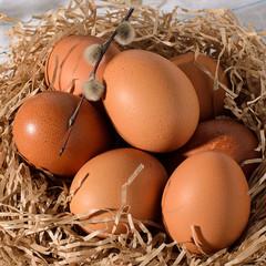 Fresh brown eggs on rustic, wooden, black, dark background in the nest