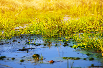 small water pond among a green grass