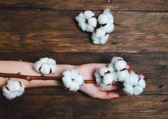 Cotton plant flower on brown wooden background