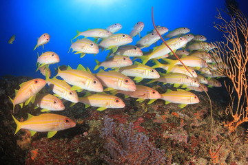 Deurstickers Onder water Coral reef and fish in ocean