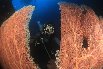 Scuba diver. Young Asian woman scuba diving