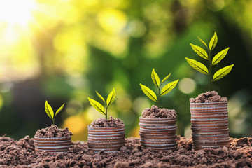 plant growing on coin stack with sunset. concept saving money and business finance
