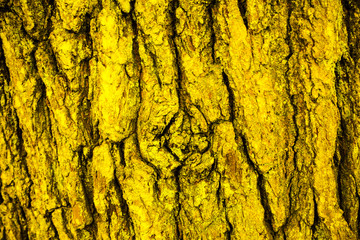 Bark and moss, wooden texture backround, brown and green tree bark baground
