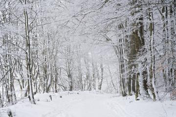 Winterlicher Waldwanderweg