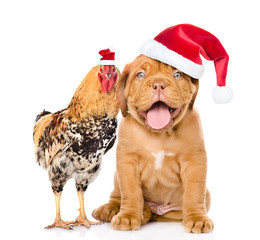 cock and puppy  in red santa hats- symbols of the Chinese New Year 2017 and 2018. Isolated on white background