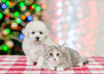bichon frise puppy and cat sitting  on a background of the Christmas tree