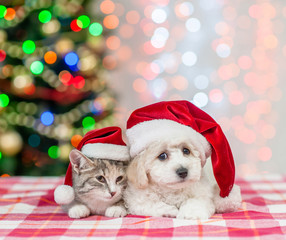 puppy and kitten in red santa hats looking at camera  on a background of the Christmas tree