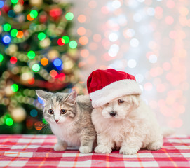 bichon frise puppy in red santa hat with kitten on a background of the Christmas tree