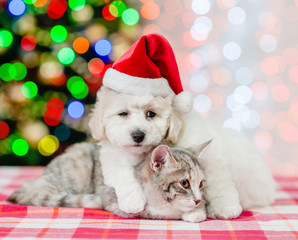 bichon frise dog in red santa hat embracing a cat on a background of the Christmas tree