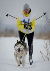 A skier is pulled by a dog during a sled and skijoring race outside Almaty