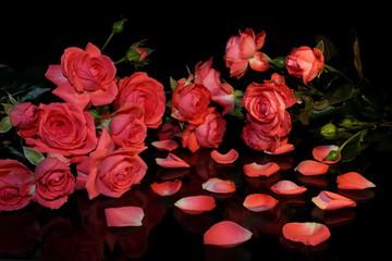 красивая розовая роза на черном фоне с отражением