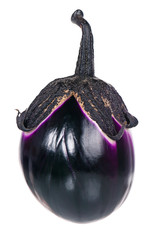 Raw purple aubergine