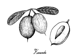 Hand Drawn of Karanda Fruits on White Background