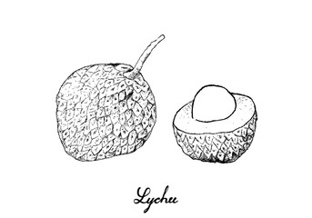 Hand Drawn of Lychee Fruits on White Background