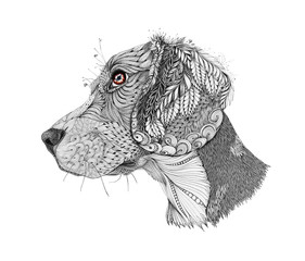 Zentangle stylized portrait of a beagle, isolated on white background. Hand drawn sketch for T-shirt emblem, logo or tattoo with doodle, zentangle design elements.