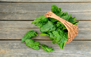 Benefits of Spinach leaves in basket on wooden floor