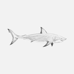 Illustration drawing style od shark