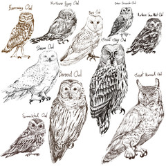 Aluminium Prints Owls cartoon Illustration drawing style of owl birds collection