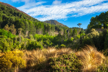 Forest and mountain range at Wilson Bay on the side of Glenorchy-Queenstown road  with golden grasses in the foreground in New Zealand.