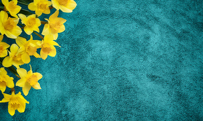 Holiday background with Yellow flowers daffodils