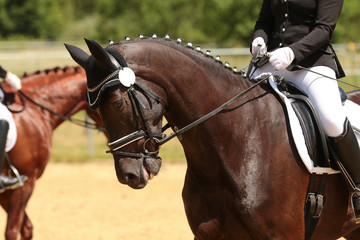 Horse in portraits before a dressage test..