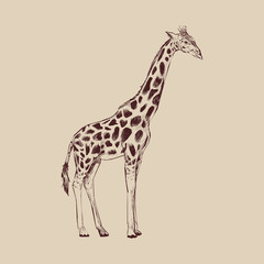Illustration of a giraffe