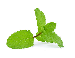 mint leaves with drop of water isolated on white background