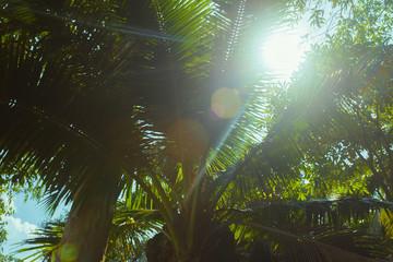 Sea. Tropical Paradise.