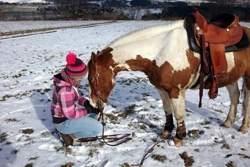 mit dem pferd durch den winter