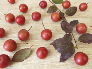 Zweig mit roten Blutpflaumen und Blättern