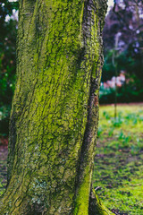 tree trunk covered in intensively green moss