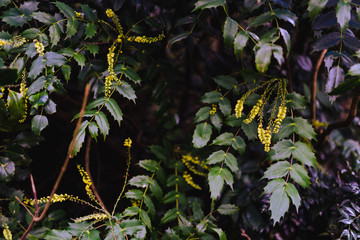 tree branches with small yellow flowers