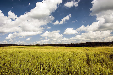 Large field, forest and clouds in the sky