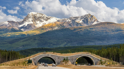 Autumn - Wildlife Overpass on Trans Canada Highway in Banff National Park