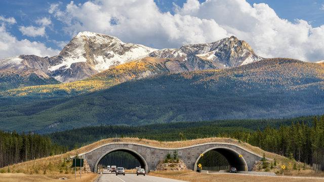 Autumn - Wildlife Overpass Bridge on Trans Canada Highway in Banff National Park