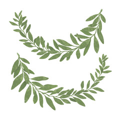 Hand drawn bay leaf wreath isolated on white background.Pastel texture.