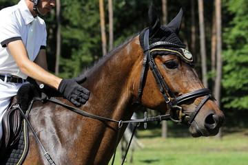 braunes Pferd mit Reiter in Nahaufnahme beim Reitturnier