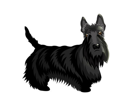 Cute cartoon dog Scotch Terrier.