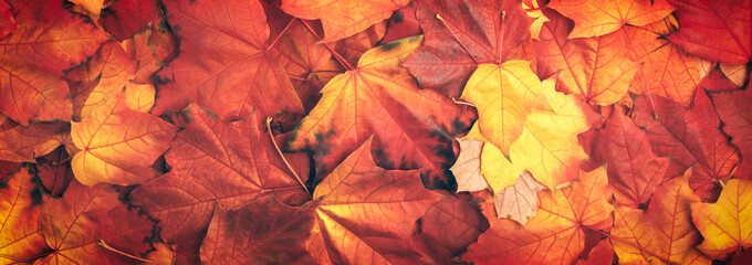 Web banner colorful autumn leaves texture background