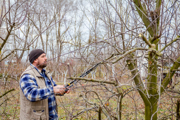 Gardener is cutting branches, pruning fruit trees with long shears in the orchard