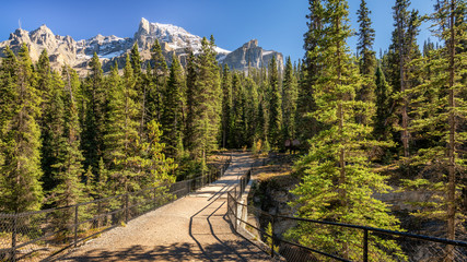 Mistaya Canyon - Icefields Parkway in Banff National Park