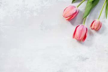 Pink tulip flower background. Top view with copy space.