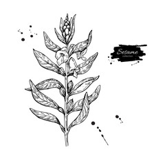 Sesame plant vector drawing. Hand drawn food ingredient. Botanic