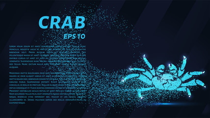 The crab consists of particles. Crab consists of dots and circles. Blue crab on dark background