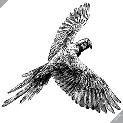 black and white engrave isolated parrot vector illustration