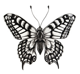 Silhouette of butterfly. Symbol of soul, immortality, rebirth and resurrection. Black and white illustration